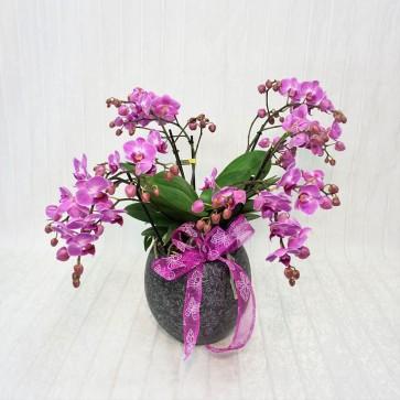Orchidea a fiore piccolo
