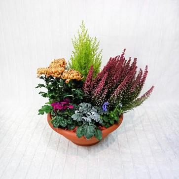 Ciotola in Piante verdi e fiorite