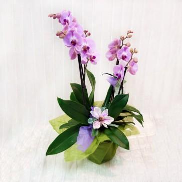 Orchidea Grande Lilla/Rosa Decorata