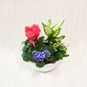 Ciotola Mista in Vaso in Ceramica