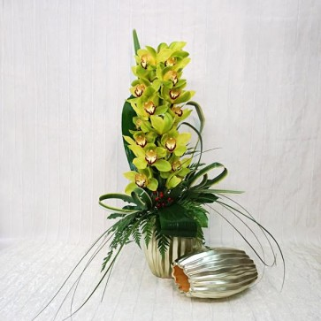 Orchidea Cymbidium Recisa