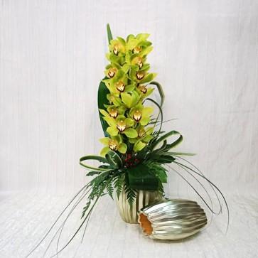 Orchidea Cymbidium Recisa