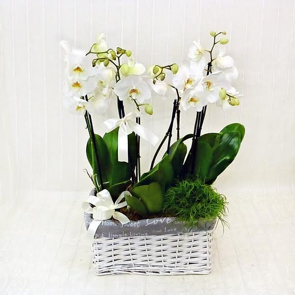 Molto Composizione di Orchidee Fiorista Della Santa IY19