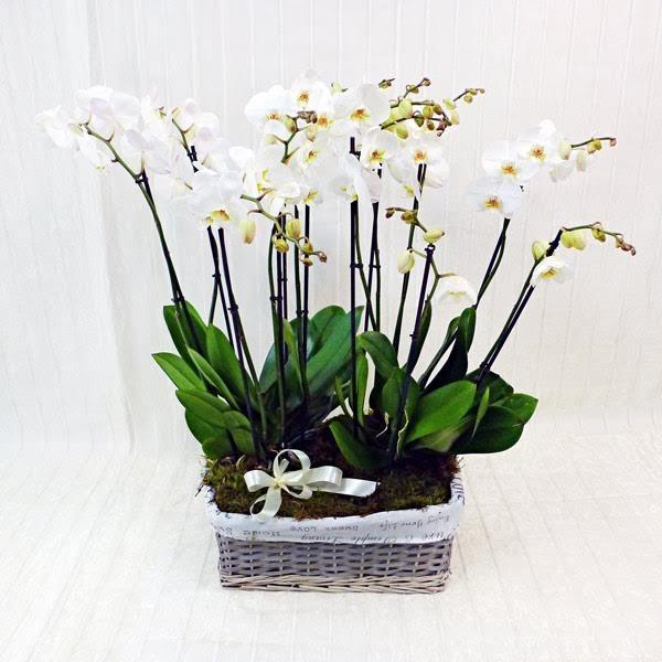 Composizione di orchidee grandi fiorista della santa for Vasi per orchidee