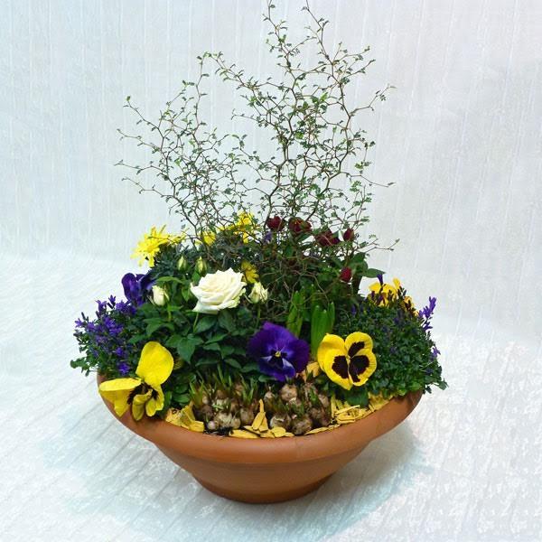 Giardino fiorito fiorista della santa for Giardino fiorito
