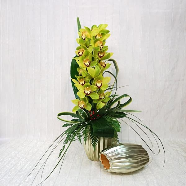 Exceptional Orchidea Cymbidium Recisa