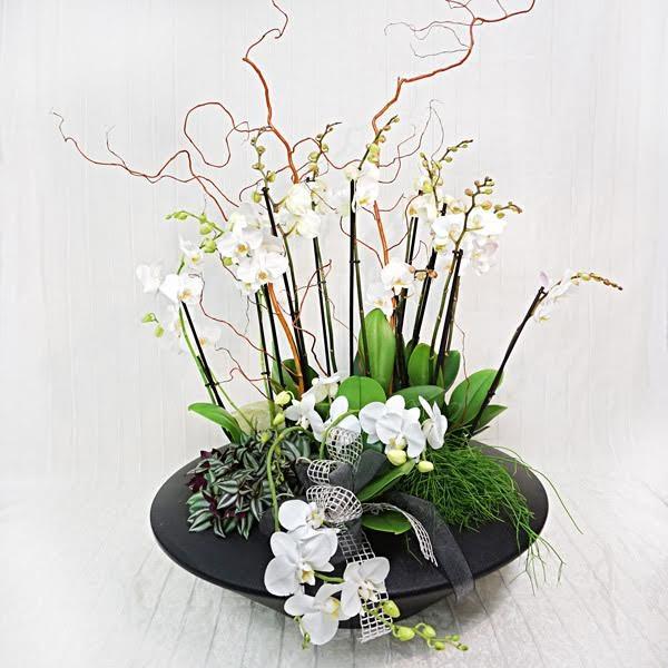 Elegante composizione di orchidee fiorista della santa - Vasi per orchidee ...