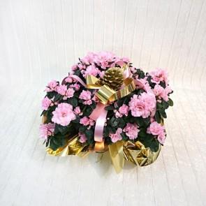 Azalea Decorata