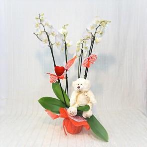 Orchidea degli Innamorati