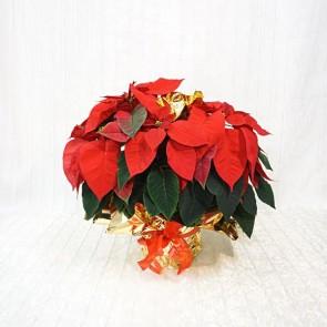Stella di Natale decorata